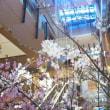 雨の根津美術館