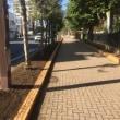 2017年11月5日 本町小前の花植え準備