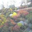 日比谷公園の紅葉