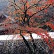 神社仏閣の紅葉2