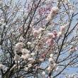季節の花「桃」