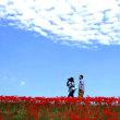 赤い花げしき