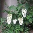 我が家&近所の花。。