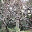 小石川後楽園は梅香る庭園に出かけました。その2