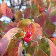 紅葉開始と落葉