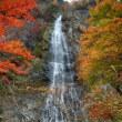 天滝の紅葉・見ごろです!