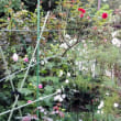 秋の庭その後