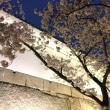 大阪城 桜のすそに 衣替え
