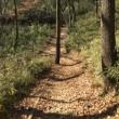 平山城祉公園散歩