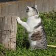 お散歩猫ちゃん