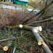 風害木の伐採