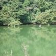 散歩の風景、白鷺が1羽