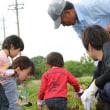キタアカリの収穫☆