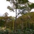 夏焼山から大平峠へ(4)