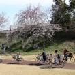 サクラ咲く・一宮市木曽川堤 8