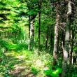 森の遊歩道(15)