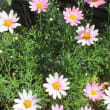 近くのお花たち
