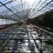 温室はプチジャングル