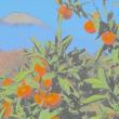 『大磯富士』 絵画調