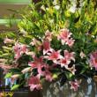 春の花、ライラック、バラ(モッコウバラ)