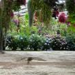 加茂荘花鳥園へ