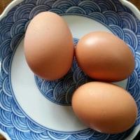 2ランマイホーム卵!