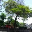 木の影も 道路に繁って 初夏の風  〔道路が空に 空が道路に 成る(鳴る)一瞬〕