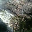 桜です!1.