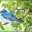 色鉛筆画453 (エゴノキと青い鳥)