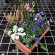 寄せ植え    自由花材
