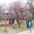 古城公園の梅