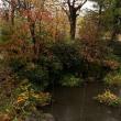 木の葉が散る