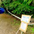 愛知県北設楽郡設楽町田峰の寒狭川に多数の「オシドリ」がやって来ています。