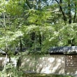 下鴨神社 糺ノ森 その4