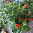 猫除けの花壇と冬の花壇 夏の花が咲いてます