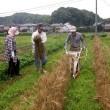 楽しい麦の刈り取りとジャガイモの収穫