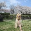 嬉しい春~♪