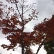 秋の日光・中禅寺湖周遊/華厳の滝放水量444%増ということなので・・・。