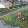 中央公園運動公園