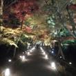 京都に来てます。