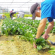 障害者の農業技術認証、第1期が終了 京都、農家との連携課題