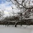 雪片付けで始まる一日