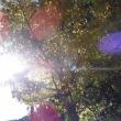 銀杏の木が色づきました!