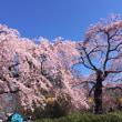 「榴ヶ岡公園の桜」