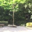 新緑の梅ヶ渕不動堂