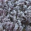 11月<12>今年一番の霜でした