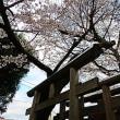 『桜便り』 宇賀神社
