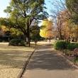 北の丸公園 紅葉・散歩