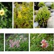 甑島の風景と植物