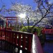 茂原公園の桜5
